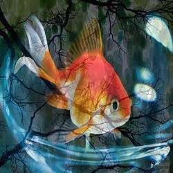 Acetate Pet Fish